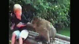 Шаловливые обезьяны смотреть видео прикол - 0:46