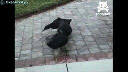 Три утки против лазера смотреть видео прикол - 0:48