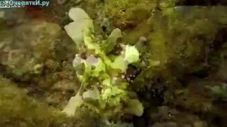 Рыба-лягушка смотреть видео прикол - 2:20