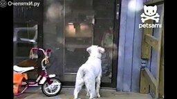 Смотреть Пёс протаранил дверь