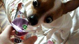Смотреть Вкусняшка для собачки