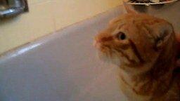 Смотреть Кот бьёт тревогу в ванной