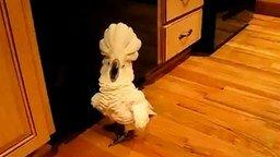 Смотреть Попугай бьёт тревогу