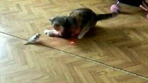 Смотреть Кошка и птичка против лазера