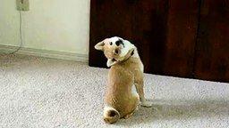 Смотреть Позитивная собачка