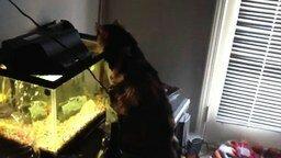 Смелая рыбка против кошки смотреть видео прикол - 0:29