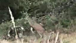 Олень прогоняет охотника смотреть видео прикол - 0:29