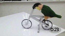 Смотреть Животные за рулём велосипеда