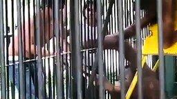 Орангутан отнял футболку смотреть видео прикол - 2:49