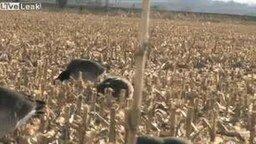 Собака поймала на лету гуся смотреть видео прикол - 0:25
