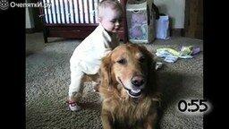 Смотреть Собаки играют с детишками