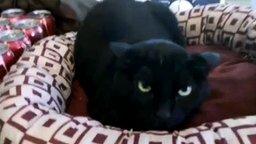 Смотреть Добро и зло в кошачьем исполнении