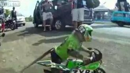 Обезьянка-мотоциклист смотреть видео прикол - 0:40