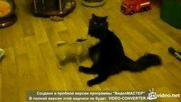 Смотреть Приставучий щенок против кота