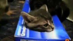 Смотреть Топ-10 милых видео с кошками