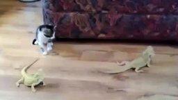Смотреть Котёнок против двух ящериц