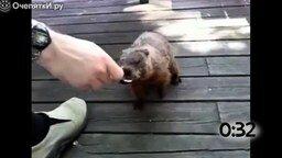 Животные наслаждаются мороженым смотреть видео прикол - 1:03