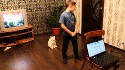 Кот не стерпел самодеятельности смотреть видео прикол - 0:32