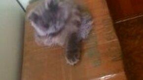 Реактивный кот смотреть видео прикол - 0:56