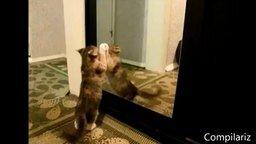 Смотреть Зверушки играют со своим отражением