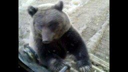 Медведь и тракторист смотреть видео прикол - 0:38