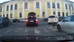 Умный четвероногий пешеход смотреть видео прикол - 0:43