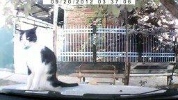 Смотреть Невозмутимый кот на капоте