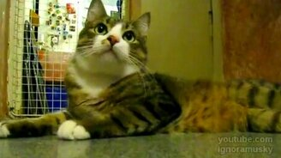 Кот и флейта смотреть видео прикол - 0:41