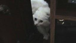 Говорящая кошка смотреть видео прикол - 2:01