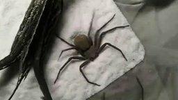 Смотреть Был паук - и не стало