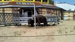 Смотреть Слоны-шутники