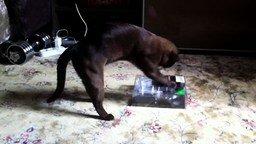 Усердный кот и упаковка смотреть видео прикол - 0:49