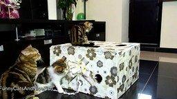 Смотреть Котятки и коробка