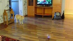 Кот против вертолёта смотреть видео прикол - 1:20