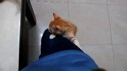 Кошачий лифт смотреть видео прикол - 0:48