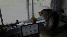 Внезапный кот за стеклом смотреть видео прикол - 0:32