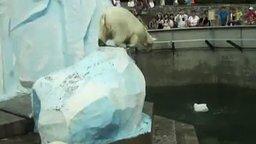 Смотреть Белый медведь и канистра