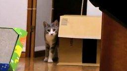 Застывший котяра смотреть видео прикол - 1:13