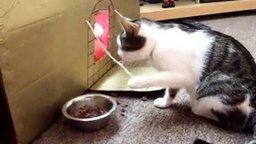 Кот ест, как человек! смотреть видео прикол - 0:21