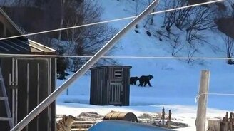 Тётя Зина против медведей смотреть видео прикол - 0:48
