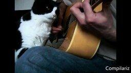 Ну, очень ласковые кошки! смотреть видео прикол - 3:42