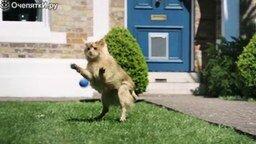 Смотреть Как кошка стала собакой