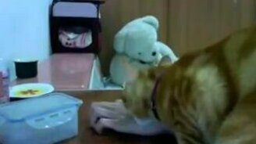 Кот, который всегда добивается своего смотреть видео прикол - 0:57