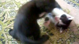 Смотреть Эпичная битва котят