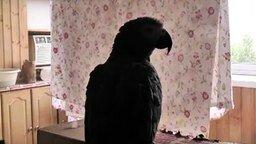 Попугай с человеком общается на равных смотреть видео прикол - 4:05