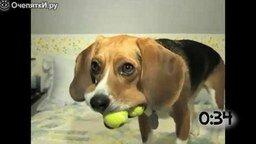 Смотреть Животные играют с теннисными мячами