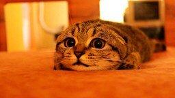 Взгляд у кота - просто бомба смотреть видео прикол - 0:57