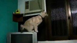 Самые прикольные кошки и коты смотреть видео прикол - 2:03