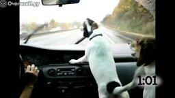 Смотреть Собаки против автомобильных дворников