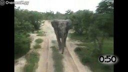 Смотреть Животные атакуют туристов на транспорте